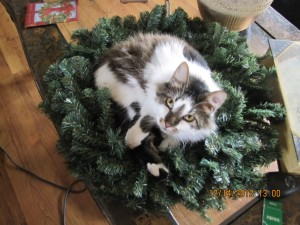 Should we say how many times you fell off the table? Or the sofa after we moved the wreath?