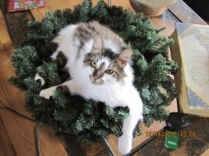 Lovely Cat Wreath for your Home. Cheap! Just call.