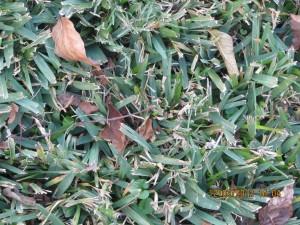 Grass....Green....